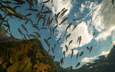Protecting the Fynbos Fish in the Breekkrans River