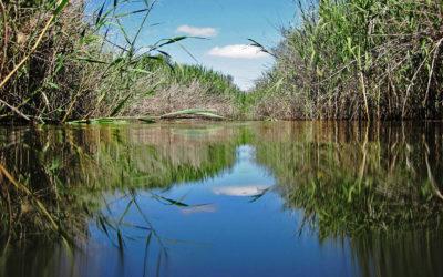 Creating sanctuaries for Endangered Clanwilliam sandfish
